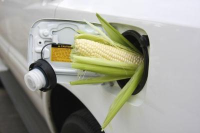 Биотопливо наносит природе больший вред, чем бензин